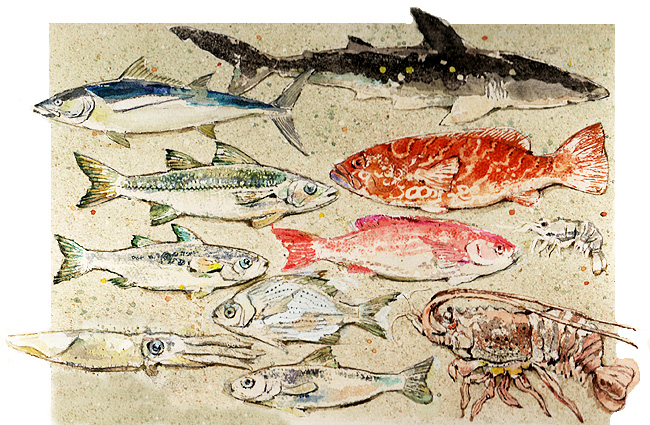 Tipos de peces con sus nombres - Imagui