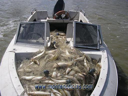 100 kilos de pejerrey se encontraron en la embarcación