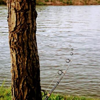 Pesca 21