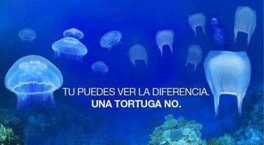 Las tortugas no distinguen entre medusas y bolsas de plástico: Se las comen y se indigestan.