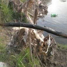 La rama que saque y deje al costado