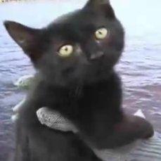 gatitos usados como cebo para pescar tiburones