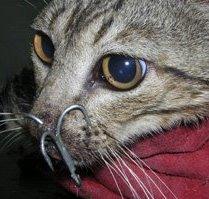 gato-anzuelo-001