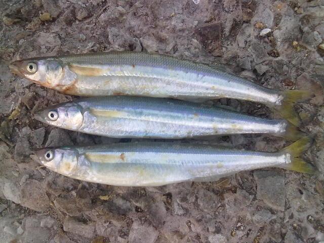 www.pescabaires.com