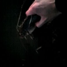 Momento de liberar uno de los bagres sacados