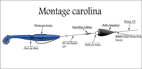 Montage Carolina