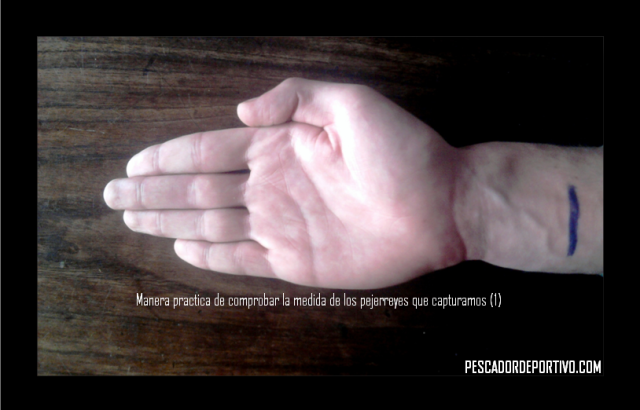 25 cm - Pejerrey
