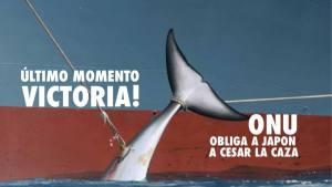 Foto: Alerta Verde