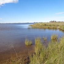Costa de la Laguna (cerca de afluente Brandsen)