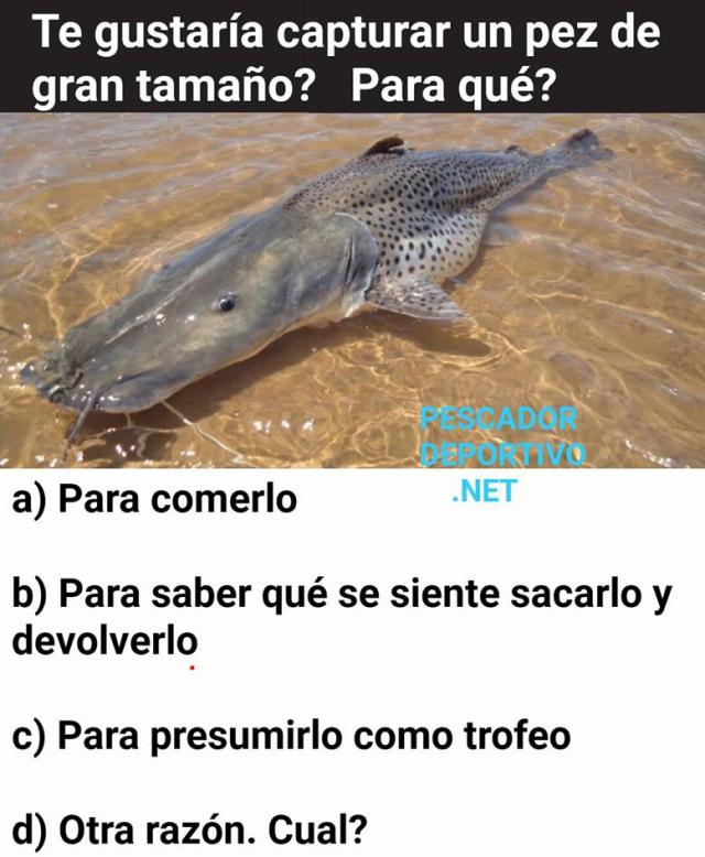 Meme Pesca 16