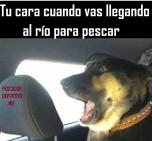 Meme Pesca 51