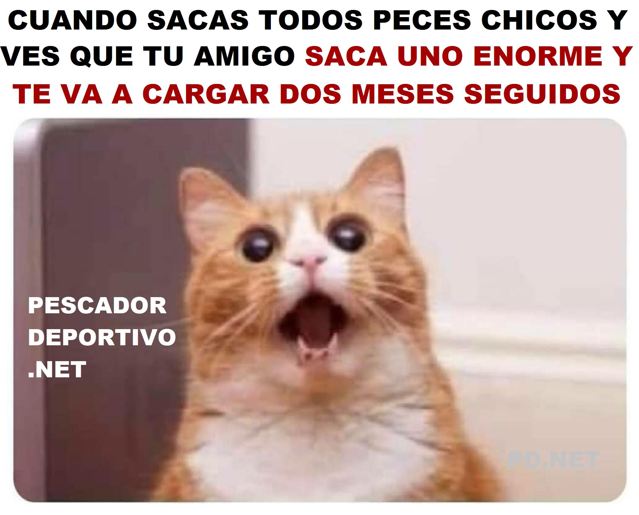 AMIGO PEZ GRANDE SACA