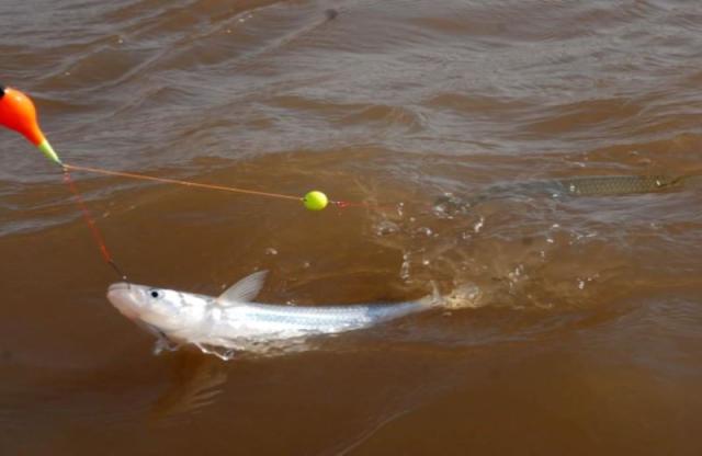 Iniciar pesca pejerrey.png