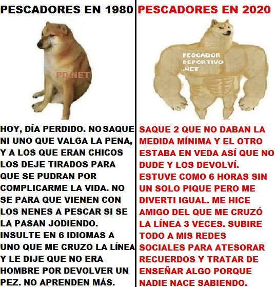 1591837142323_perro musculoso 34612182283065604344..png