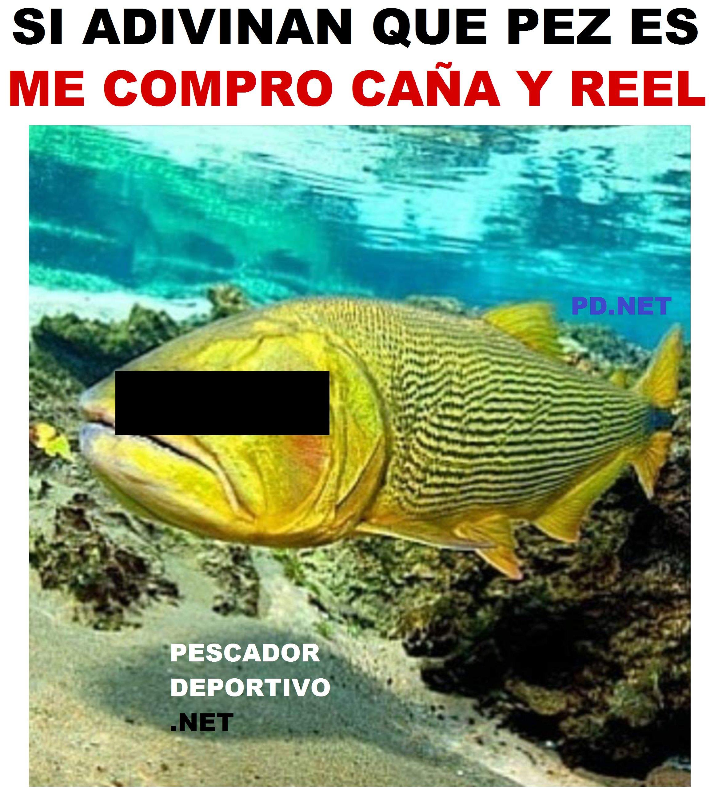que pez es dorado2319667788584123164..png