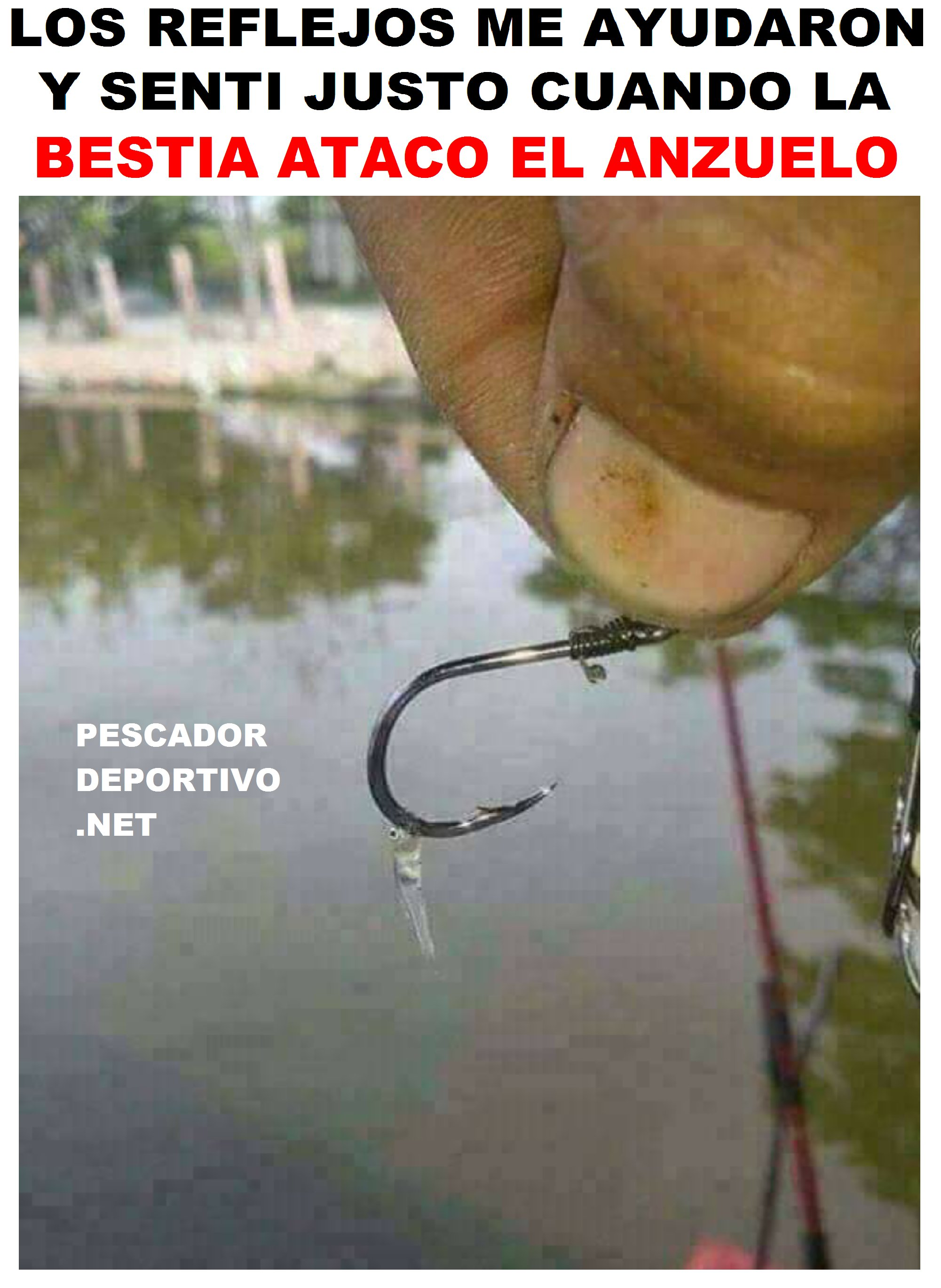 reflejos pesca2313020367876845535..png